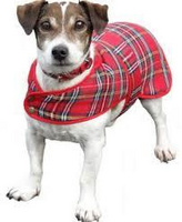 Tartan dog coat LARGE