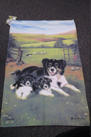 tt collie and pups