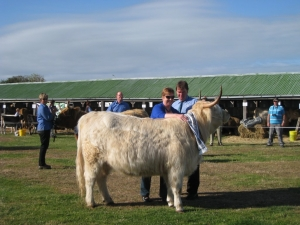 Highland cattle show Oamaru 2013